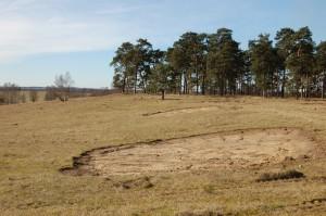 Sandblotta på Revingefältet