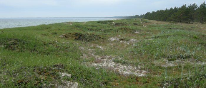 Del av Bödakusten Östra efter naturvårdsbränning våren 2017