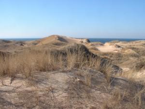 Tönnersa sanddyner. Foto: Örjan Fritz.