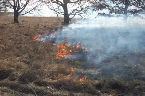 Bränning på Revingehed 2015