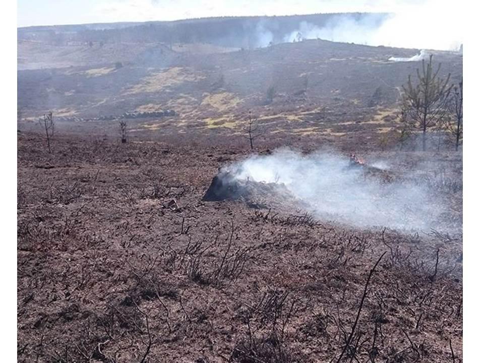 Avbränd yta på BNB 2016
