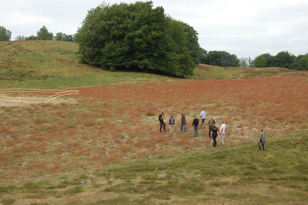 Drygt 3 hektar plöjdes på Drakamöllan under våren 2015. I vänstra kanten ses en tillfällig inhägnad för att stänga ute de betande djuren och få upp blomrikedomen.