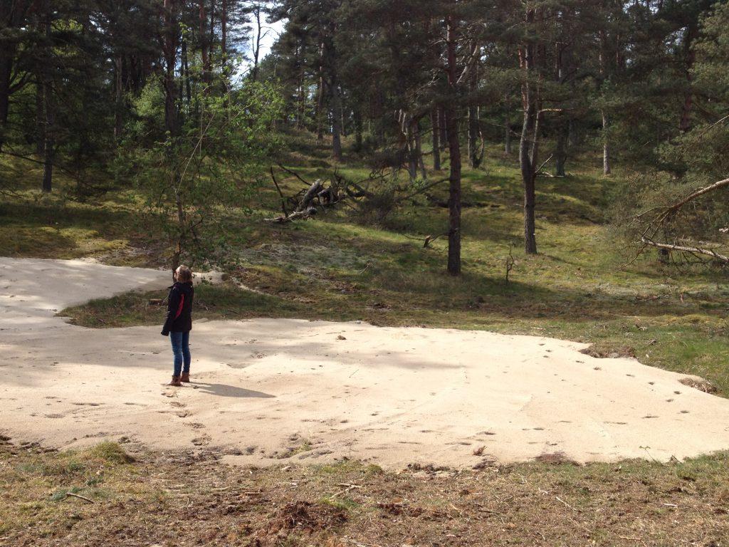 Grävd sandblotta i Vitemölla