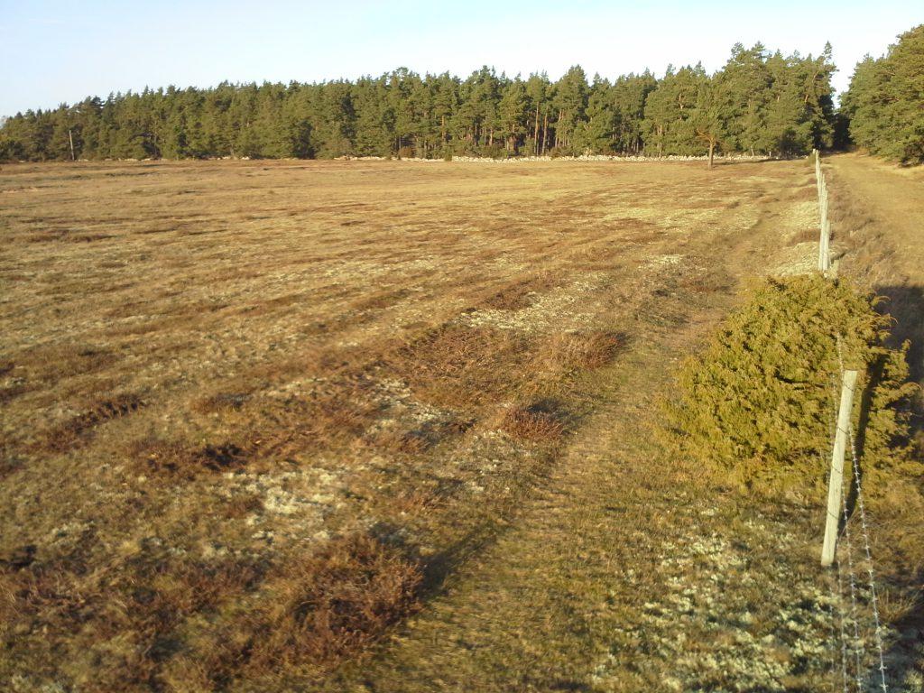 Där ljungen klippts på Gårdby sandhed.